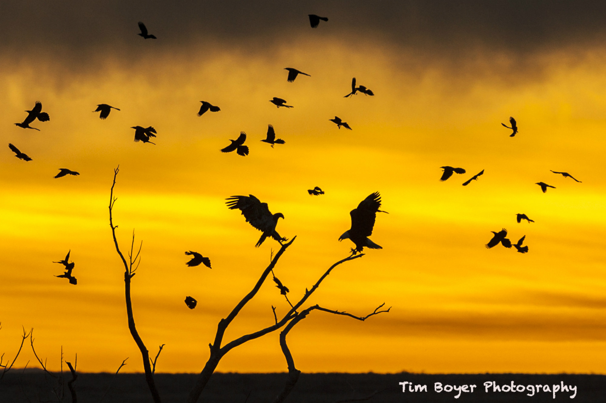 bird photography tip image