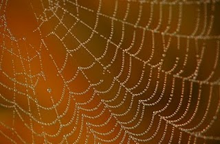 Photography Tip - Photographing Spider Webs